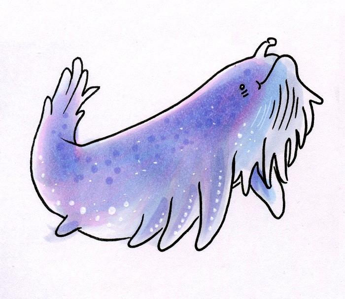 star whale dk